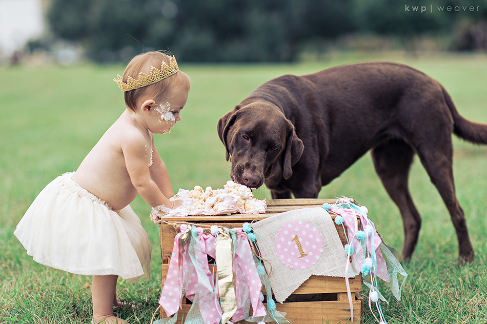 Baby and dog share cake