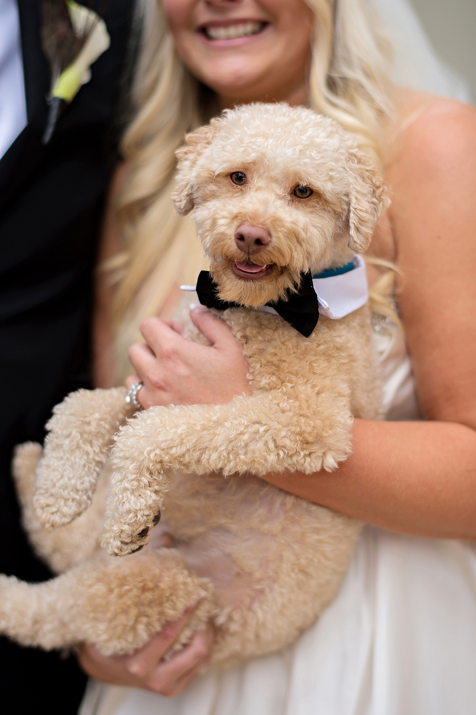 wedding puppy