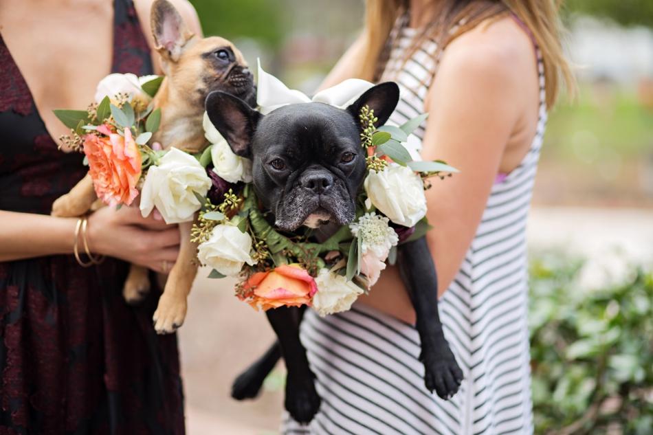 flower collar for dog