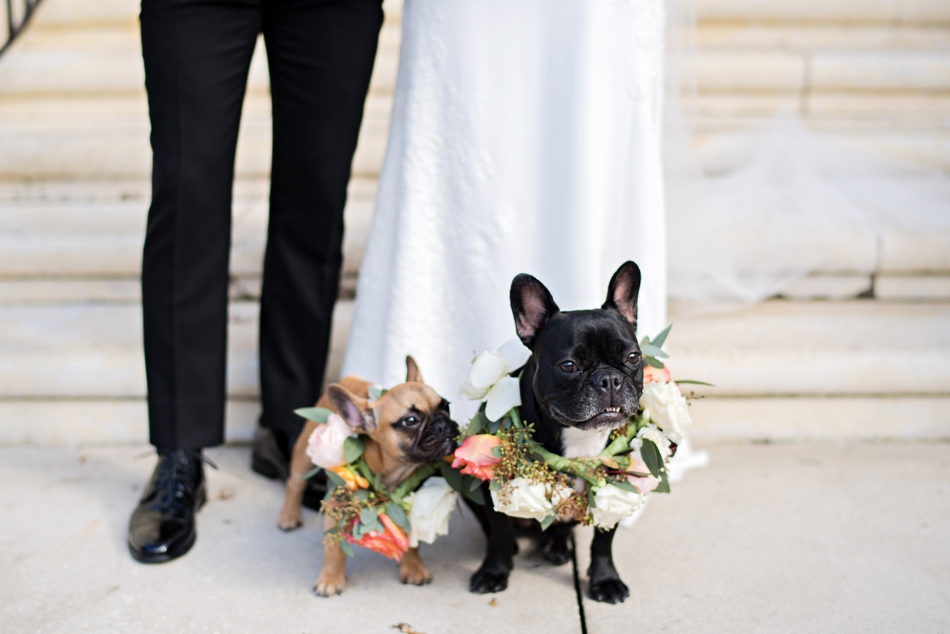 dogs at wedding with flower collars